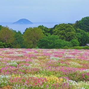 マイカーで向かう花の離島『のこのしまアイランドパーク』(福岡市)