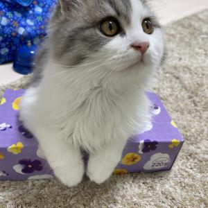 ◯◯◯が好きでたまらない猫