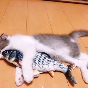 モフ猫寝姿詰合せ