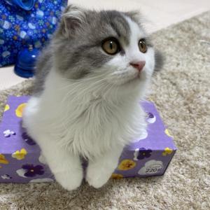 猫のパン屋さん