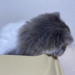 猫を飼う準備講座PART2
