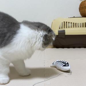 猫が豹変する遊び