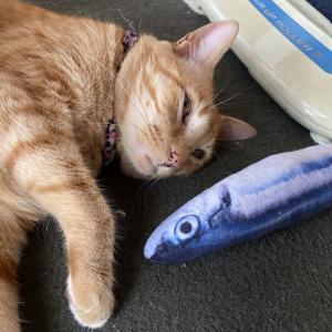 なぜ猫はマタタビが好きなのか?