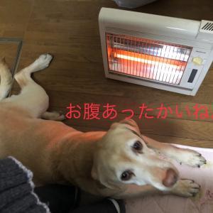 気がつくと暖をとっている犬