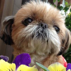 今日は先住震災犬と出会った日