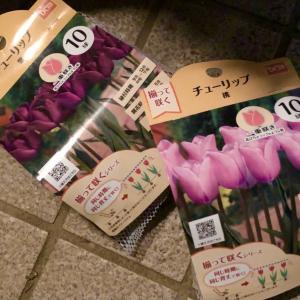 外花壇に寄せ植えを作る。その3