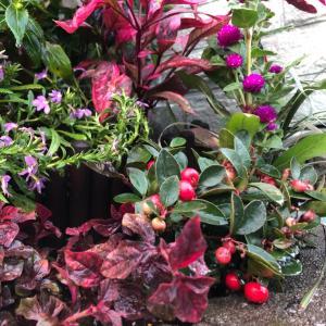 外花壇に寄せ植えを作る。その4完成