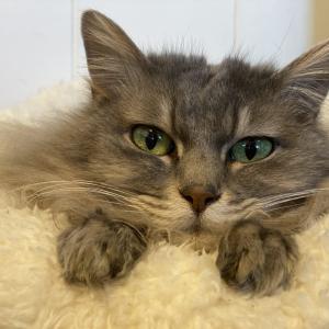 猫の糖尿病との付き合い方、新しい暮らしのスタート。