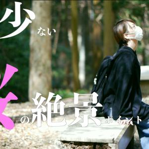 人が少ない、桜の絶景ポイント→南大阪編