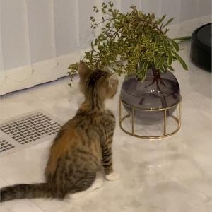 子猫のりんちゃんが我が家で初めて興味を持ったのは?