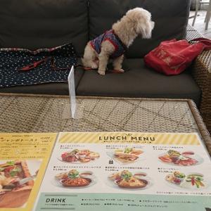 犬と一緒にご飯を食べよう!  「COTE CAFE」~カレージャンボトースト~