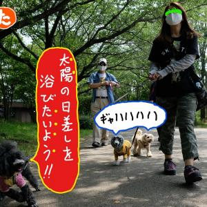 「犬ダジャレかるた総集編」  (た行)