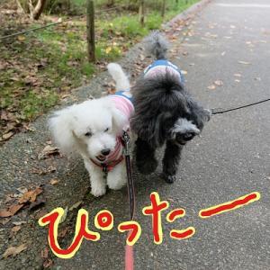 オノマトペ写真館  「冬桜、咲いてます!秋の青葉の森公園でお散歩」