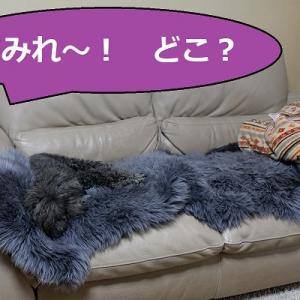 犬4コマ劇場  「保護色」すみれがいな~い( ̄▽ ̄;)