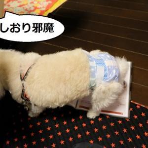 犬と一緒に出掛けよう!  「じゃぱり館山」総ツッコミ編(犬4コマ劇場)