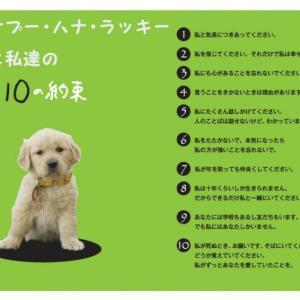 育犬初心者が犬を飼育するのに必要な三大決心