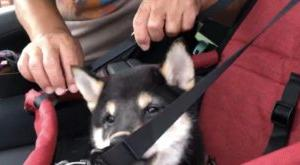 愛犬とのドライブを安全に楽しむには、