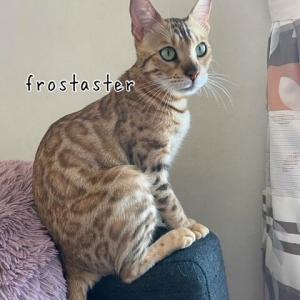 可愛い猫背