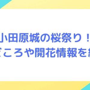 【小田原城址公園】桜まつり2021!見どころや開花情報を紹介!