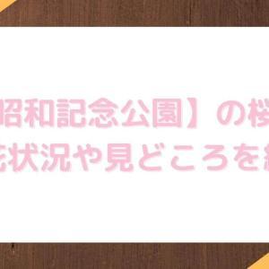 【昭和記念公園】桜の見頃2021!開花状況やおすすめスポットを紹介
