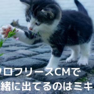 ユニクロフリースCM2020で猫と一緒に出てるのはミキ亜生?