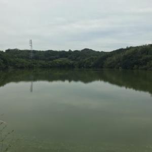 知多の野池をちょっと様子見に行ってきた