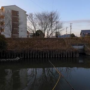 稗田川でコイのフライフィッシング-20210115