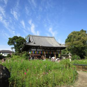 800年秘蔵された白鳳の仏さま ― 般若寺 ―