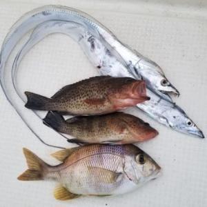 タイラバとエギングの釣果 田辺釣行 令和2年10月18日