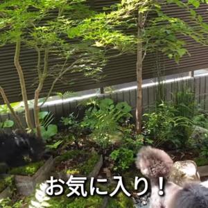 2021.6.10 【Emmaの食欲】 Uno1ワンチャンネル宇野樹より
