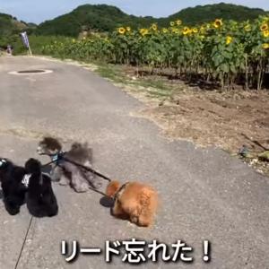 2021.6.20 【カントリー散歩】 Uno1ワンチャンネル宇野樹より