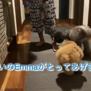 2021.9.22  【Emmaのおまじない‼️】  Uno1ワンチャンネル宇野樹より