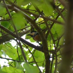 ジィちゃんと探鳥、北本自然観察公園の野鳥/2020-09-17