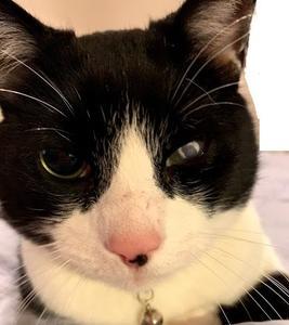 目の見えない猫;ブラインドキャット;Blind Cat