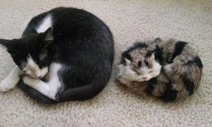 猫の今昔比べ
