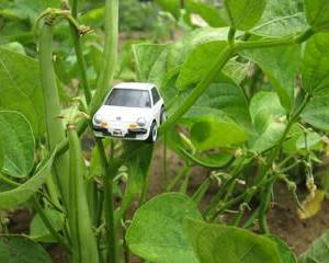 サヤインゲンの収穫 & パイクカー検定Q88