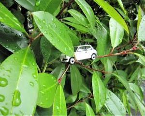 長い梅雨 & パイクカー検定Q96