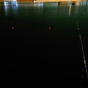 黒遊會2人釣行記    nightふかせ しナイト❗