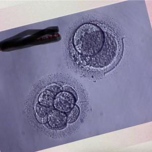 初めての胚移植&フライング検査