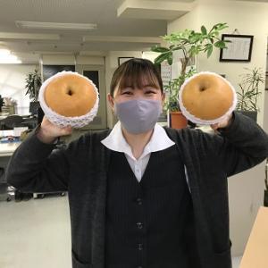 大きい梨♪