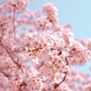 雨模様の日曜日。あと半月で桜が咲きそうな札幌