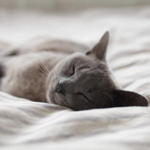 目覚ましアラームは鳥の鳴き声。アラフィフになると二度寝出来ない問題