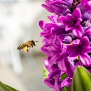 【コロナワクチン接種】予約できましたin札幌。そして蜂に刺された今日。