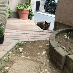 <東京>野良猫を保護_1話。