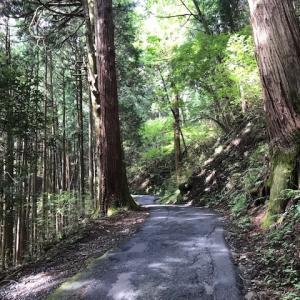 山散歩:御岳山〜奥の院〜鍋割山〜大岳山