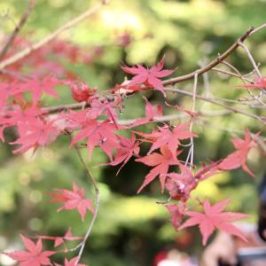 【おでかけ】三島市「楽寿園」で菊まつりを楽しんだり、のんびりお散歩したり動物を眺めたり。