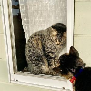 本日も外猫ちゃんが遊びに来たよ😺♪