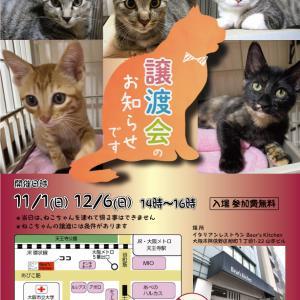 11月1日(日)「保護ねこの家 譲渡会」のお知らせ!!