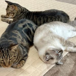 保護猫ちゃん達の変化② あかたん編
