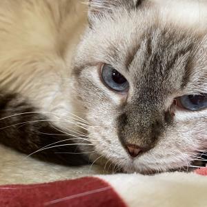 いびきをかく猫